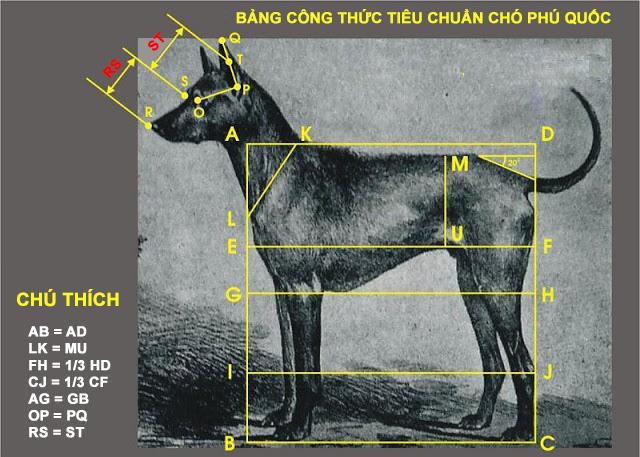 đặc điểm nhận dạng chó phú quốc